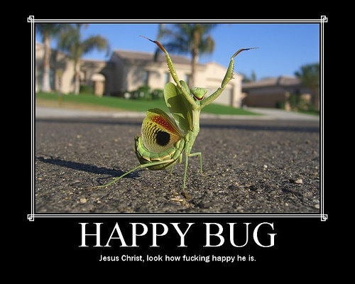 happy bug meme